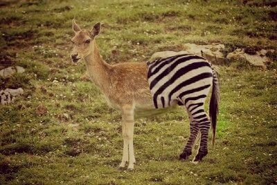Then I saw a half deer half zebra. I was like - PicsArt