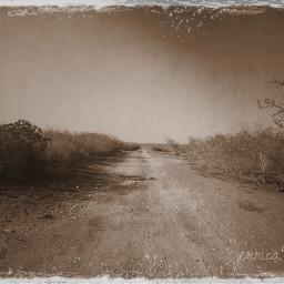 nature black & white vintage photostory old photo wapvintage
