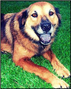 pets & animals family best friend thefox