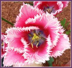 nature photography colorful love flower spring