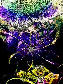 emotions colorful color splash flower hdr nature dcscratchboard