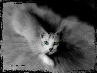 emotions old photo black & white pets & animals