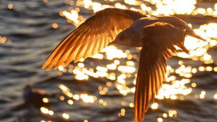 nature bird photography